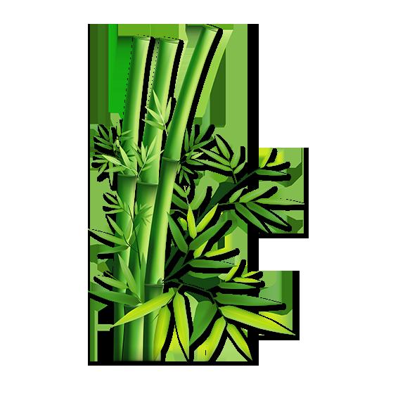 bamboo_PNG70